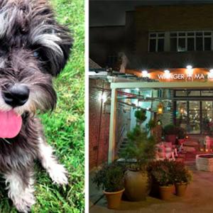Dog Cinema at Wringer and Mangle
