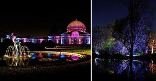 Syon Park's Enchanted Woodland