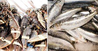 Billingsgate Fish Market