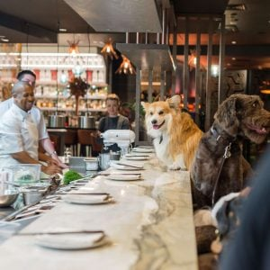 Doggy Brunch comes to London