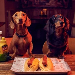 In The Dog House: Hot Dogs For Charity