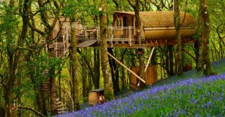 Living Room Treehouses, Powys