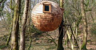 Lost Meadow Treepod, Bodmin