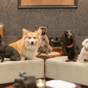 London's Most Dog Friendly Restaurants