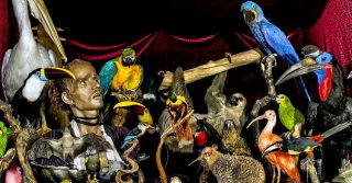 The Viktor Wynd Museum of Curiosities, Fine Art and Natural History