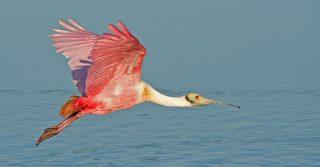 Bird Watching: J.N. Ding Darling National Wildlife Refuge