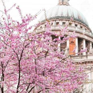 5 Picturesque Places To See Cherry Blossom In London