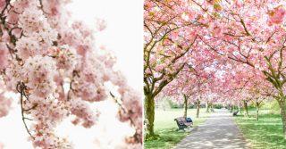 Greenwich Park & Battersea Park