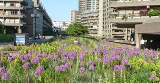 Barbican Beech Gardens