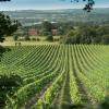 Wine Week At The Montagu Kitchen