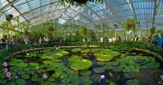 Venture Across To Kew Gardens