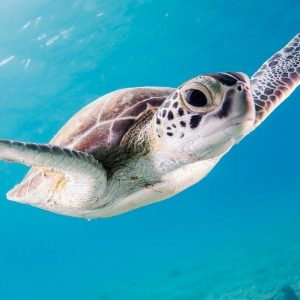 Eco-Tourism Just Got Turtle-y Awesome Down In Florida