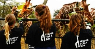 Junior Zookeeper For A Day At London Zoo