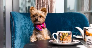 Howl With Happiness At 10 Of London's Best Doggy Menus