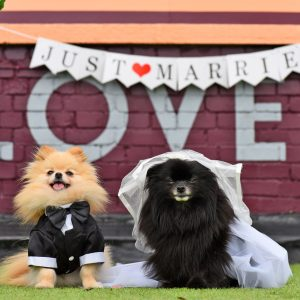 Does Your Dog Want To Get Married On A Peckham Rooftop?
