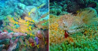 Champagne Reef, Dominica, Caribbean