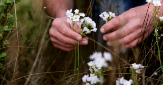 Foraging With Robin Harford