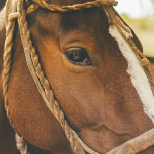 The Mane Event: Where To Go For Horse Riding In London