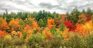 Maine, U.S.A