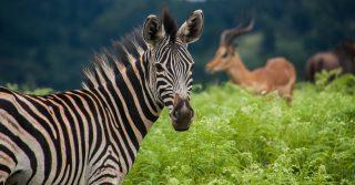 5. eSwatini (Swaziland)