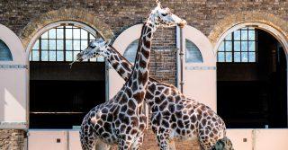 Christmas at ZSL London Zoo
