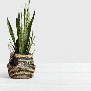 Houseplants And How Not To Kill Them!