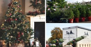 Capital Christmas Trees